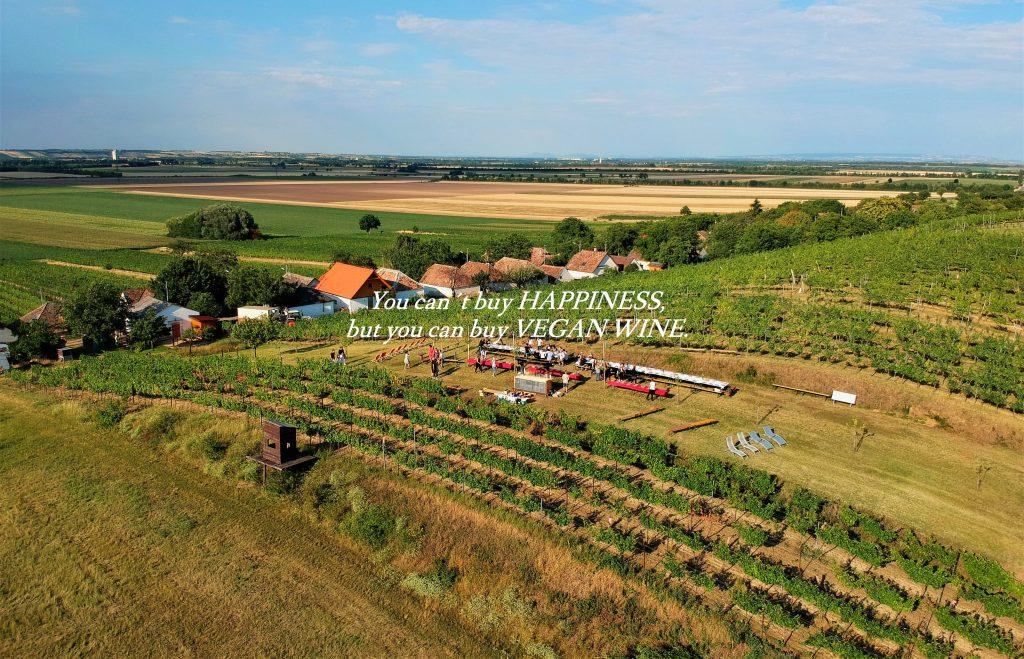 Weingarten Weingut Fürnkranz